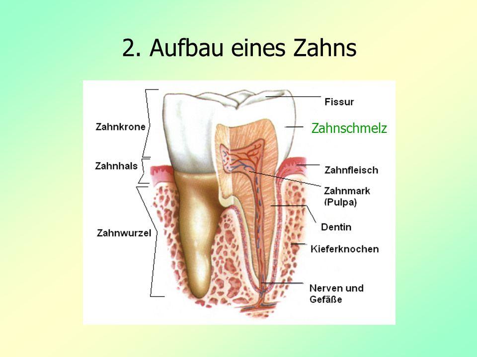 2. Aufbau eines Zahns Zahnschmelz