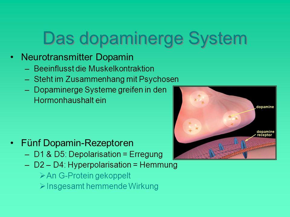 Das dopaminerge System Fünf Dopamin-Rezeptoren –D1 & D5: Depolarisation = Erregung –D2 – D4: Hyperpolarisation = Hemmung  An G-Protein gekoppelt  Insgesamt hemmende Wirkung Neurotransmitter Dopamin –Beeinflusst die Muskelkontraktion –Steht im Zusammenhang mit Psychosen –Dopaminerge Systeme greifen in den Hormonhaushalt ein