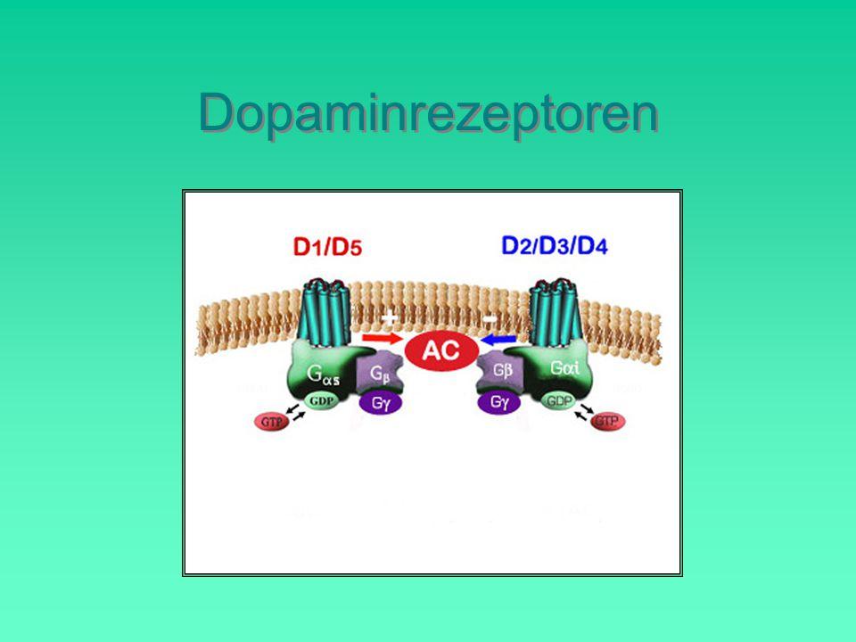 Dopaminrezeptoren