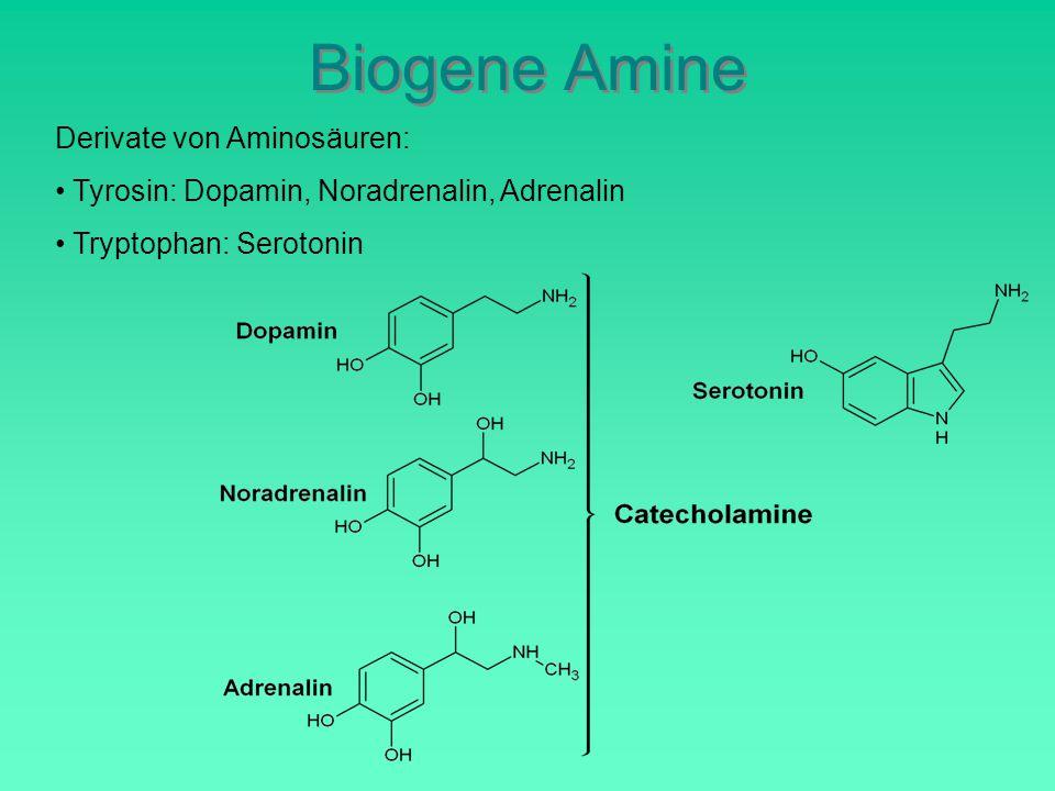 Biogene Amine Derivate von Aminosäuren: Tyrosin: Dopamin, Noradrenalin, Adrenalin Tryptophan: Serotonin