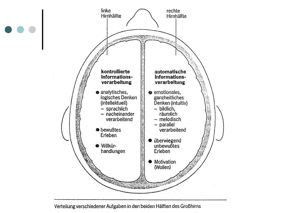 1. Grundlagen - Gehirn  2 Hemisphären  Cortex mit 4 Hirnlappen  Stirnhirnlappen (Frontallappen)  Schläfenlappen (Temporallappen)  Hinterhauptslap