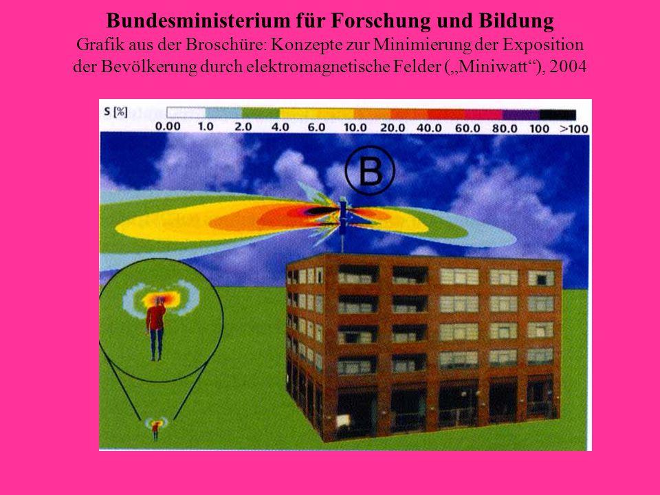 Birke im Hauptstrahl 04. Mai 2006
