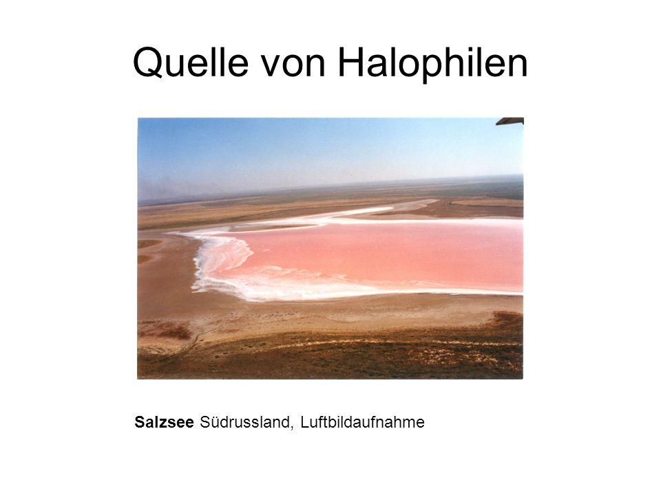 Halotolerant oder Halophil ? Tolerieren höhere Salzgehalte, sind aber nicht darauf angewiesen NaCl-GehaltBezeichnung 1 – 6 %Schwach halophil 6 – 15 %M