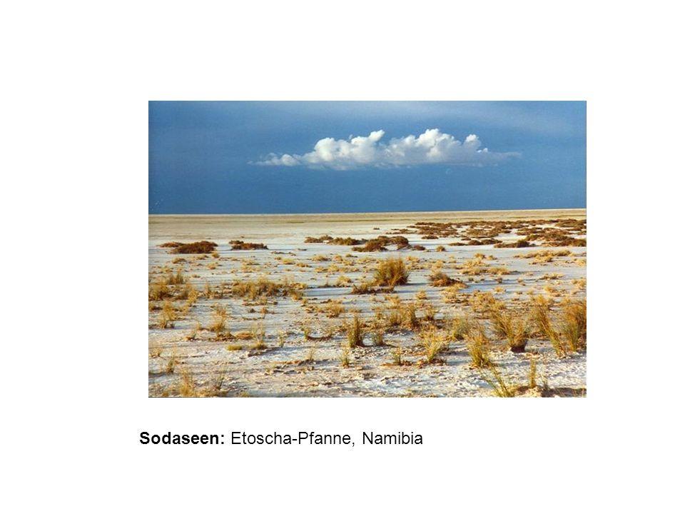 Salzsee Südrussland, Luftbildaufnahme Quelle von Halophilen