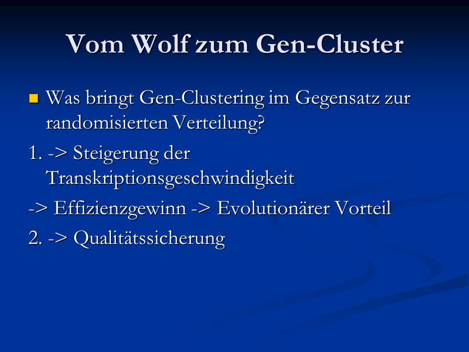 Vom Wolf zum Gen-Cluster Was bringt Gen-Clustering im Gegensatz zur randomisierten Verteilung? Was bringt Gen-Clustering im Gegensatz zur randomisiert