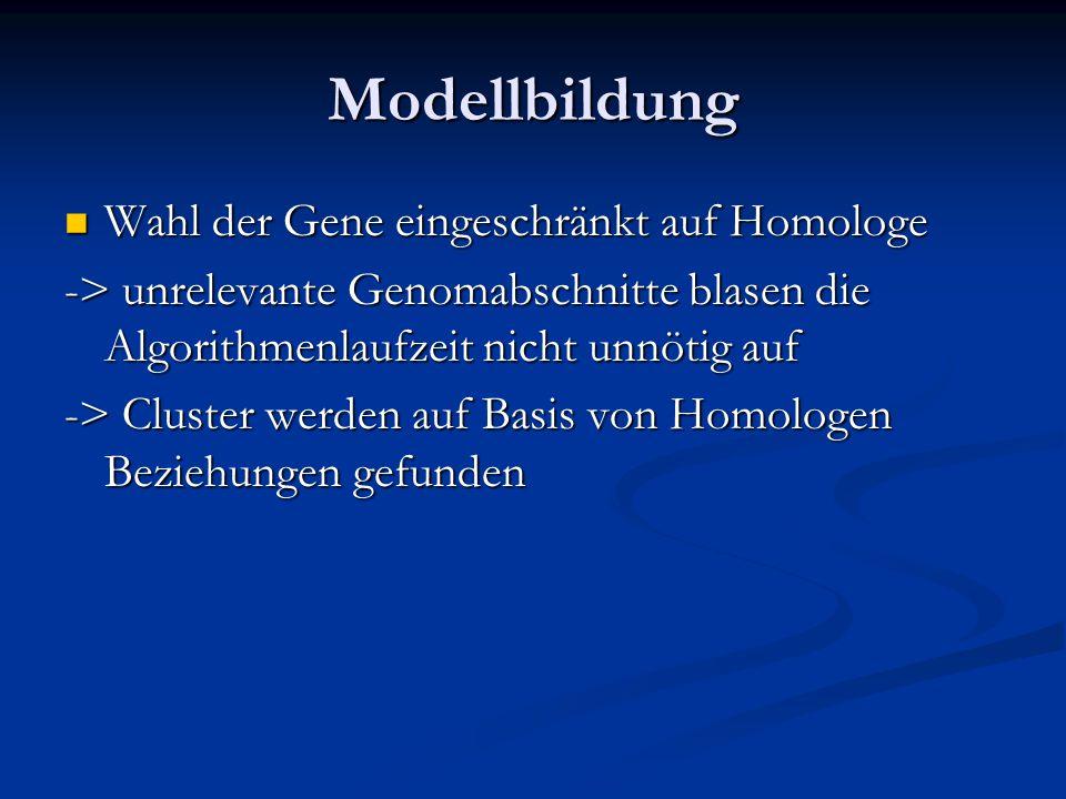 Modellbildung Wahl der Gene eingeschränkt auf Homologe Wahl der Gene eingeschränkt auf Homologe -> unrelevante Genomabschnitte blasen die Algorithmenlaufzeit nicht unnötig auf -> Cluster werden auf Basis von Homologen Beziehungen gefunden
