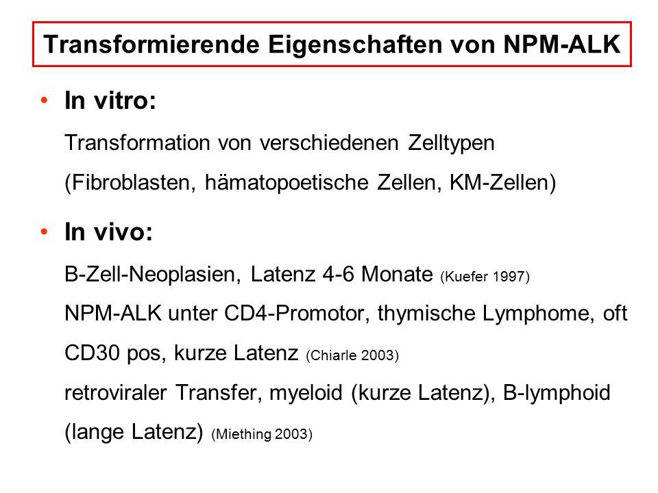 Transformierende Eigenschaften von NPM-ALK In vitro: Transformation von verschiedenen Zelltypen (Fibroblasten, hämatopoetische Zellen, KM-Zellen) In vivo: B-Zell-Neoplasien, Latenz 4-6 Monate (Kuefer 1997) NPM-ALK unter CD4-Promotor, thymische Lymphome, oft CD30 pos, kurze Latenz (Chiarle 2003) retroviraler Transfer, myeloid (kurze Latenz), B-lymphoid (lange Latenz) (Miething 2003)
