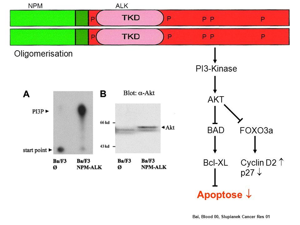 PI3-Kinase AKT BAD FOXO3a Oligomerisation Bcl-XL Cyclin D2  p27  Apoptose  NPMALK P PPP PPPP P P Bai, Blood 00, Slupianek Cancer Res 01