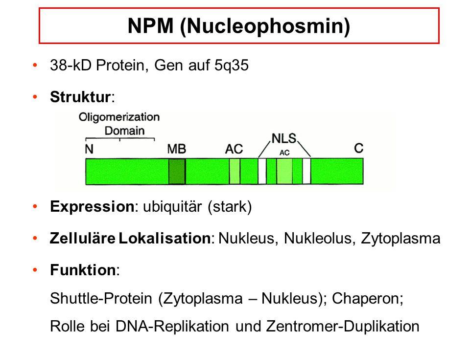 NPM (Nucleophosmin) 38-kD Protein, Gen auf 5q35 Struktur: Expression: ubiquitär (stark) Zelluläre Lokalisation: Nukleus, Nukleolus, Zytoplasma Funktion: Shuttle-Protein (Zytoplasma – Nukleus); Chaperon; Rolle bei DNA-Replikation und Zentromer-Duplikation