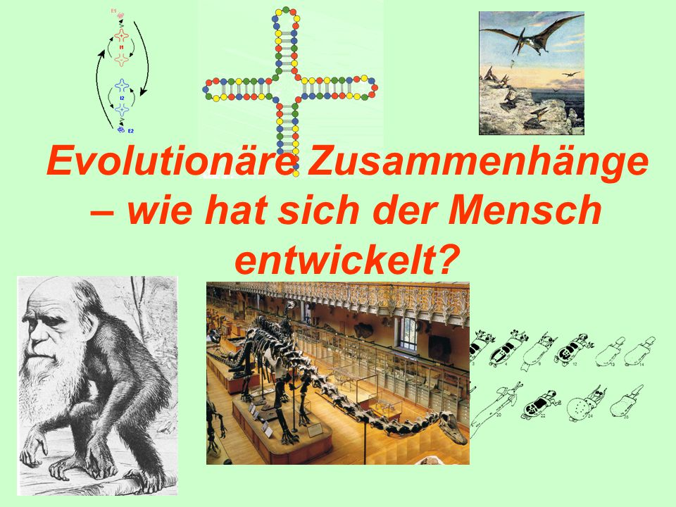 Evolution - Theorien 1.Einmaliger Schöpfungsakt 2.