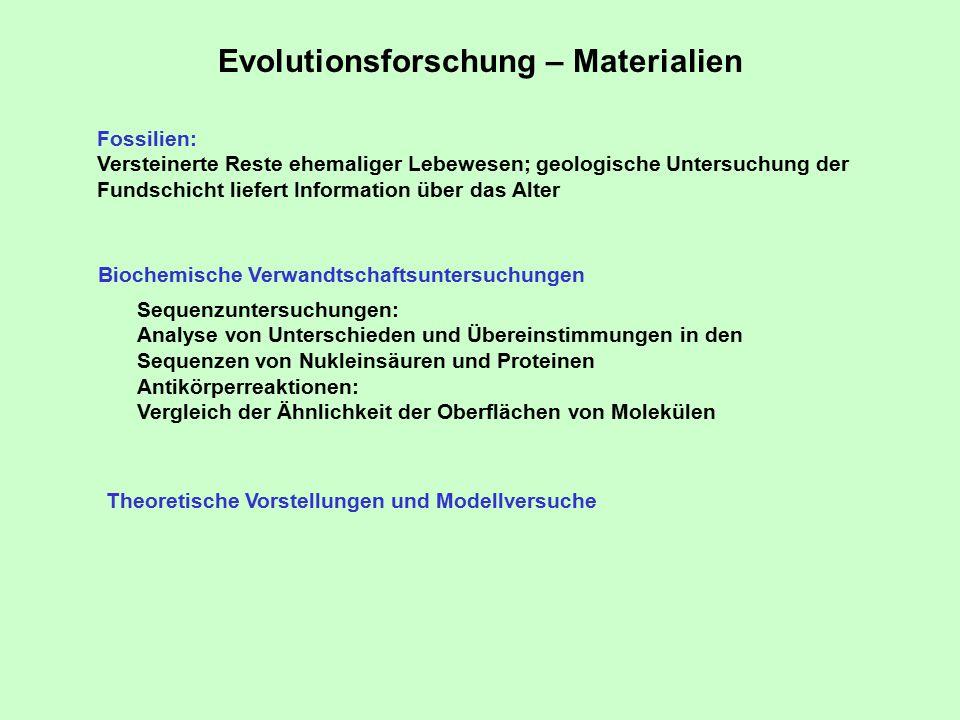 Evolutionsforschung – Materialien Fossilien: Versteinerte Reste ehemaliger Lebewesen; geologische Untersuchung der Fundschicht liefert Information über das Alter Biochemische Verwandtschaftsuntersuchungen Sequenzuntersuchungen: Analyse von Unterschieden und Übereinstimmungen in den Sequenzen von Nukleinsäuren und Proteinen Antikörperreaktionen: Vergleich der Ähnlichkeit der Oberflächen von Molekülen Theoretische Vorstellungen und Modellversuche