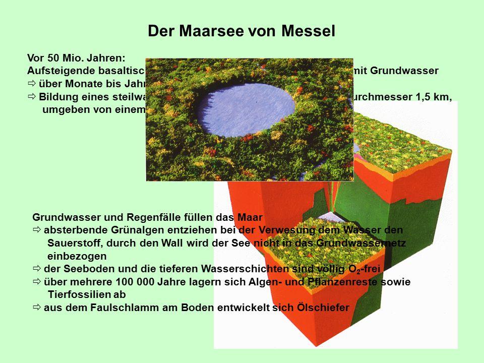 Der Maarsee von Messel Vor 50 Mio.