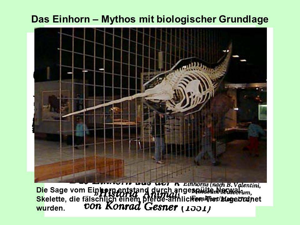 Das Einhorn – Mythos mit biologischer Grundlage Die Sage vom Einhorn entstand durch angespülte Narwal- Skelette, die fälschlich einem pferde-ähnlichen Tier zugeordnet wurden.