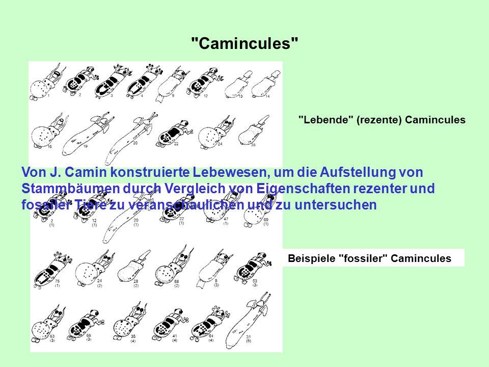 Camincules Lebende (rezente) Camincules Beispiele fossiler Camincules Von J.