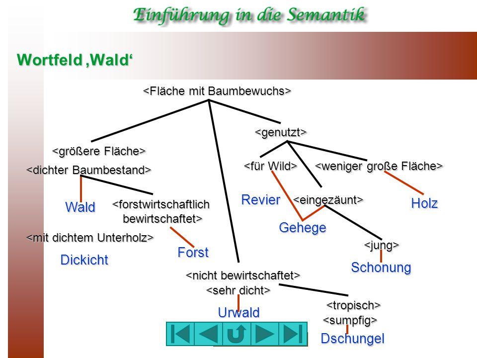 Wortfeld 'Wald' <genutzt> <eingezäunt> <tropisch> <sumpfig> <jung> Wald Holz Revier Gehege Dickicht Forst Urwald Dschungel Schonung