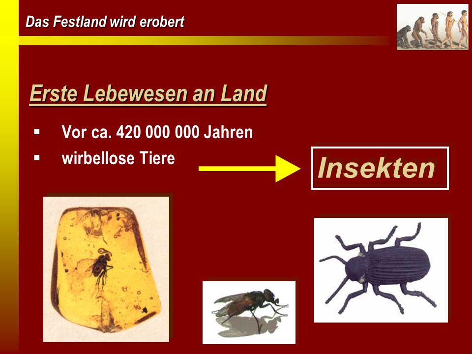 Das Festland wird erobert Erste Lebewesen an Land  Vor ca. 420 000 000 Jahren  wirbellose Tiere Insekten