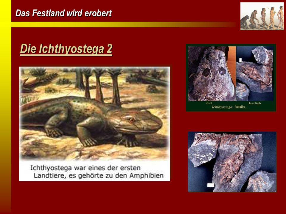 Das Festland wird erobert Die Ichthyostega 2
