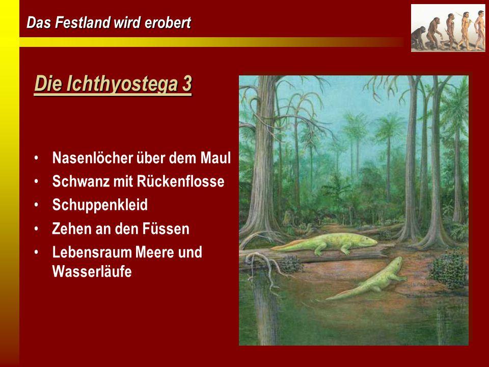 Das Festland wird erobert Amphibien  Wirbelsäule  feuchte, glatte Haut  keine Federn oder Haare  erste Tiere mit 4 Extremitäten  legen Eier  leben im Wasser und an Land