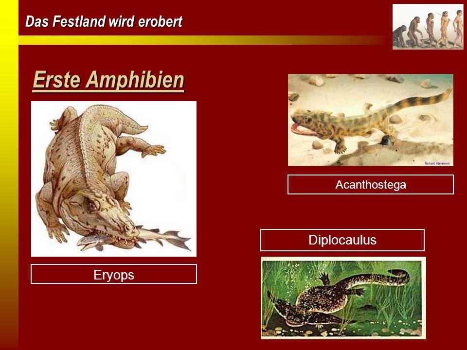 Das Festland wird erobert Erste Amphibien Eryops Diplocaulus Acanthostega