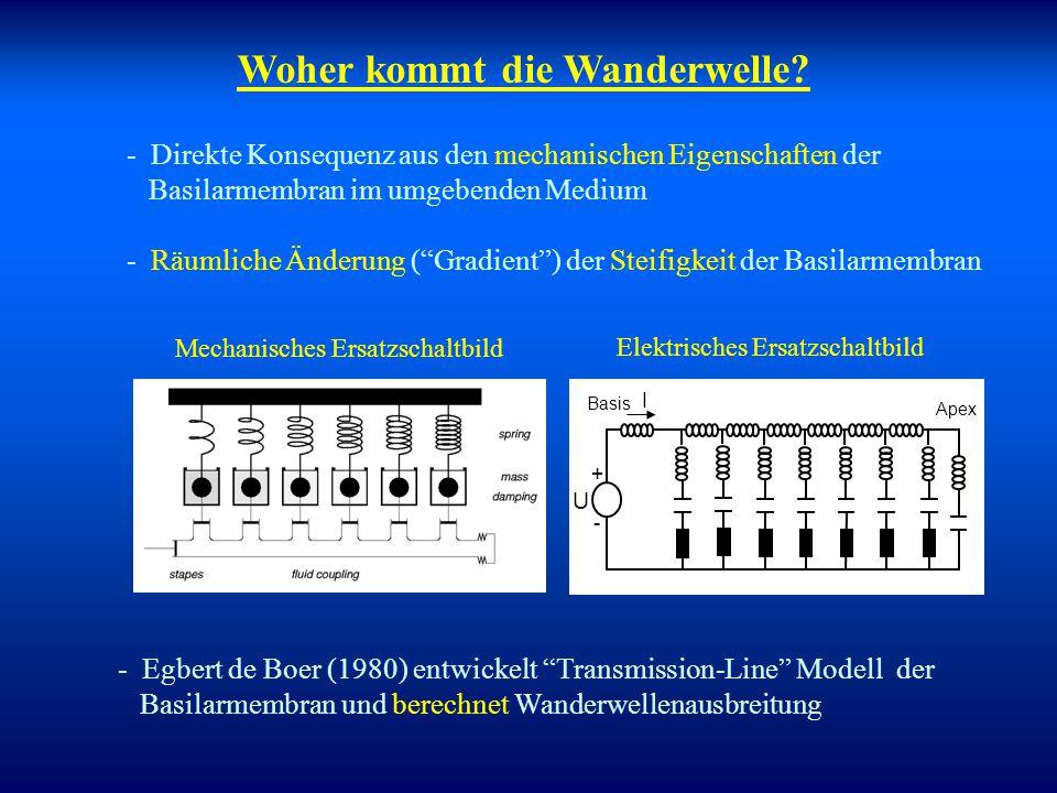 Korrelation zur Physiologie  Räumliche Dispersion: (Wanderwelle) 4 kHz 250 Hz Übertragung an festem Ort x 0 (als Funktion der Frequenz  =f/CF) Shera