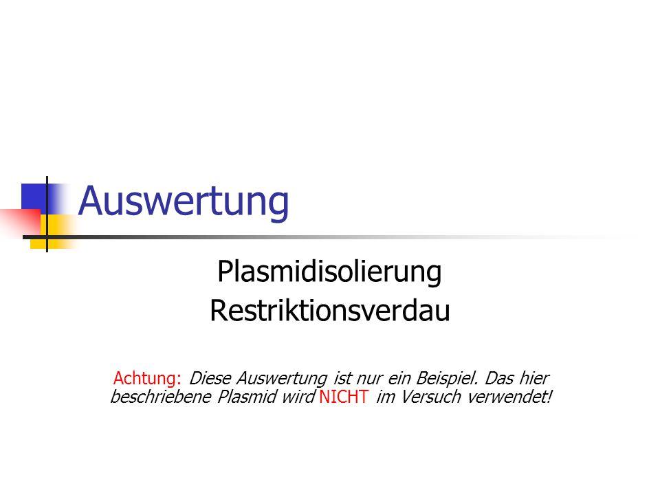Auswertung Plasmidisolierung Restriktionsverdau Achtung: Diese Auswertung ist nur ein Beispiel. Das hier beschriebene Plasmid wird NICHT im Versuch ve