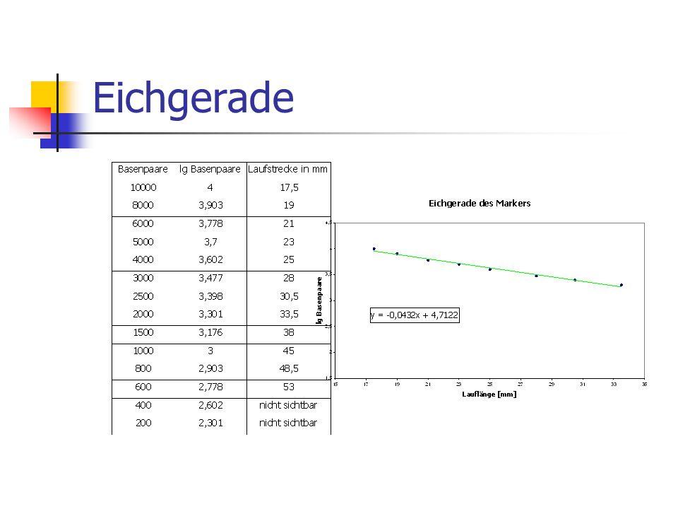 Fragmentlängen der Plasmid- Restriktion Ermittlung der resultierenden Fragmentlänge aus der Eichgeraden Gesamtlänge des Plasmids = Summe der einzelnen Fragmentlängen Durchschnittswert ermitteln und mit dem Literaturwert vergleichen: pBlue800 = 3800 bp