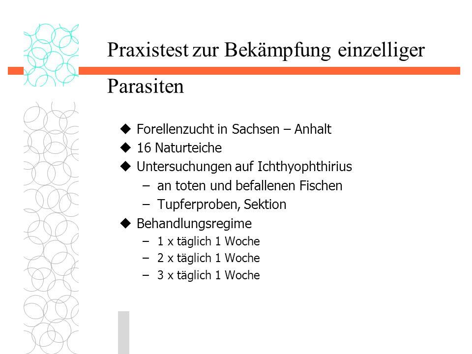 Praxistest zur Bekämpfung einzelliger Parasiten  Forellenzucht in Sachsen – Anhalt  16 Naturteiche  Untersuchungen auf Ichthyophthirius –an toten u