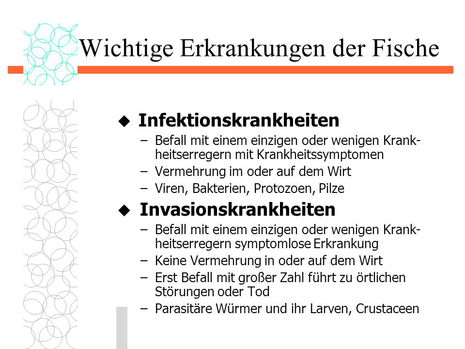 Wichtige Erkrankungen der Fische  Infektionskrankheiten –Befall mit einem einzigen oder wenigen Krank- heitserregern mit Krankheitssymptomen –Vermehr