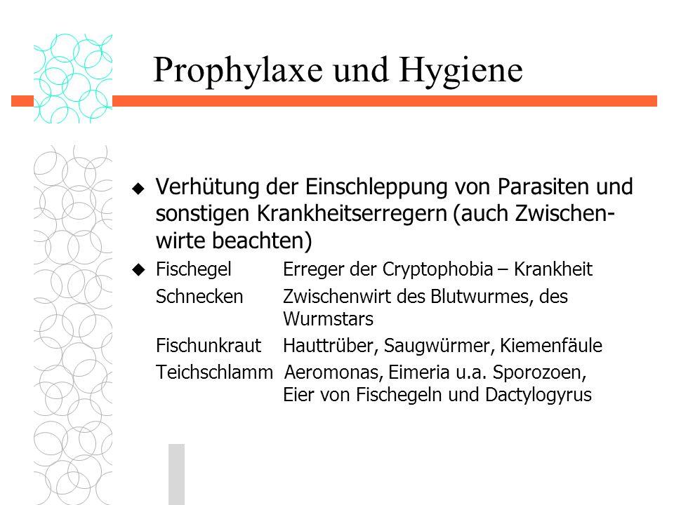 Prophylaxe und Hygiene  Verhütung der Einschleppung von Parasiten und sonstigen Krankheitserregern (auch Zwischen- wirte beachten)  Fischegel Errege