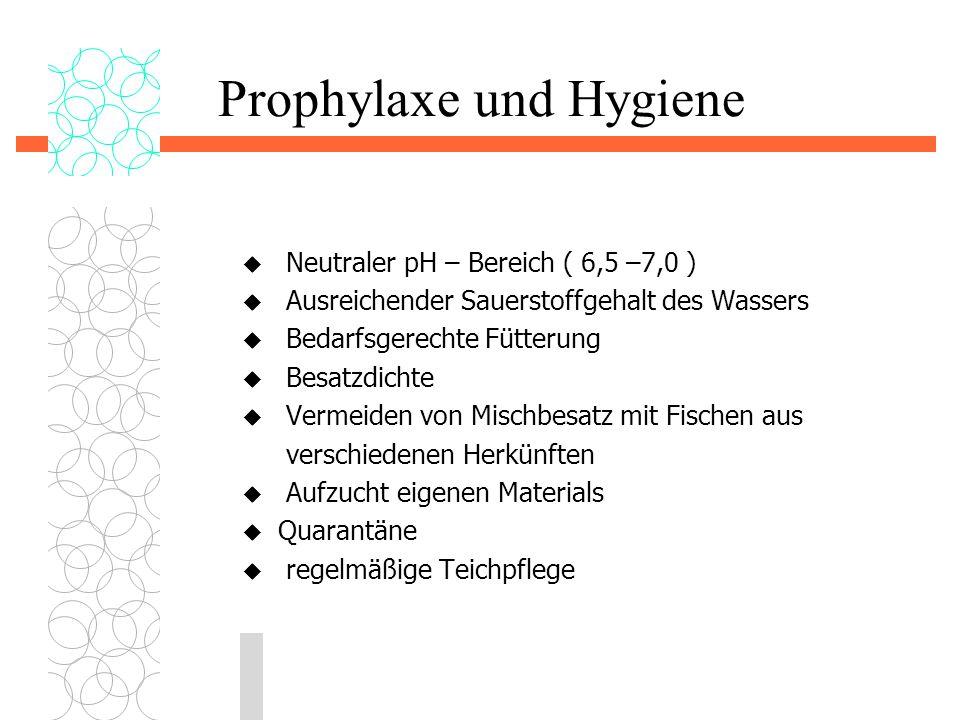 Prophylaxe und Hygiene  Neutraler pH – Bereich ( 6,5 –7,0 )  Ausreichender Sauerstoffgehalt des Wassers  Bedarfsgerechte Fütterung  Besatzdichte 