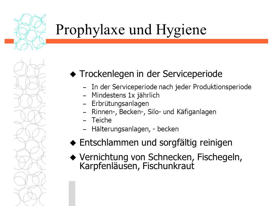 Prophylaxe und Hygiene  Trockenlegen in der Serviceperiode – In der Serviceperiode nach jeder Produktionsperiode – Mindestens 1x jährlich – Erbrütung