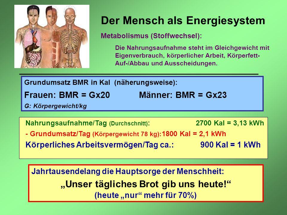 Der Mensch als Energiesystem Metabolismus (Stoffwechsel): Die Nahrungsaufnahme steht im Gleichgewicht mit Eigenverbrauch, körperlicher Arbeit, Körperf