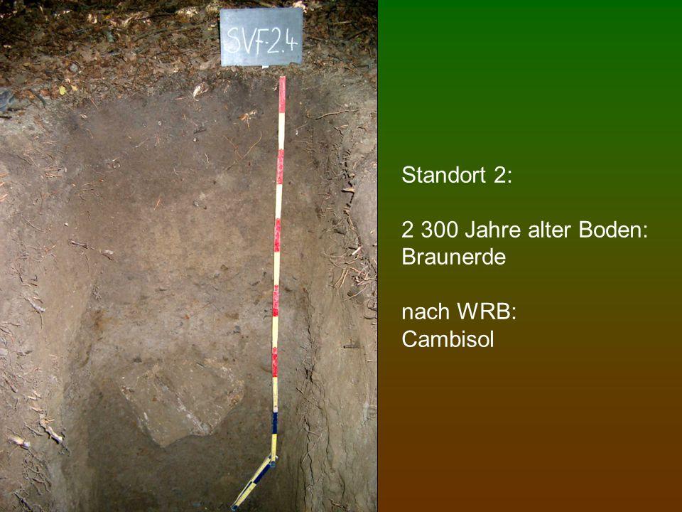 Standort 2: 2 300 Jahre alter Boden: Braunerde nach WRB: Cambisol