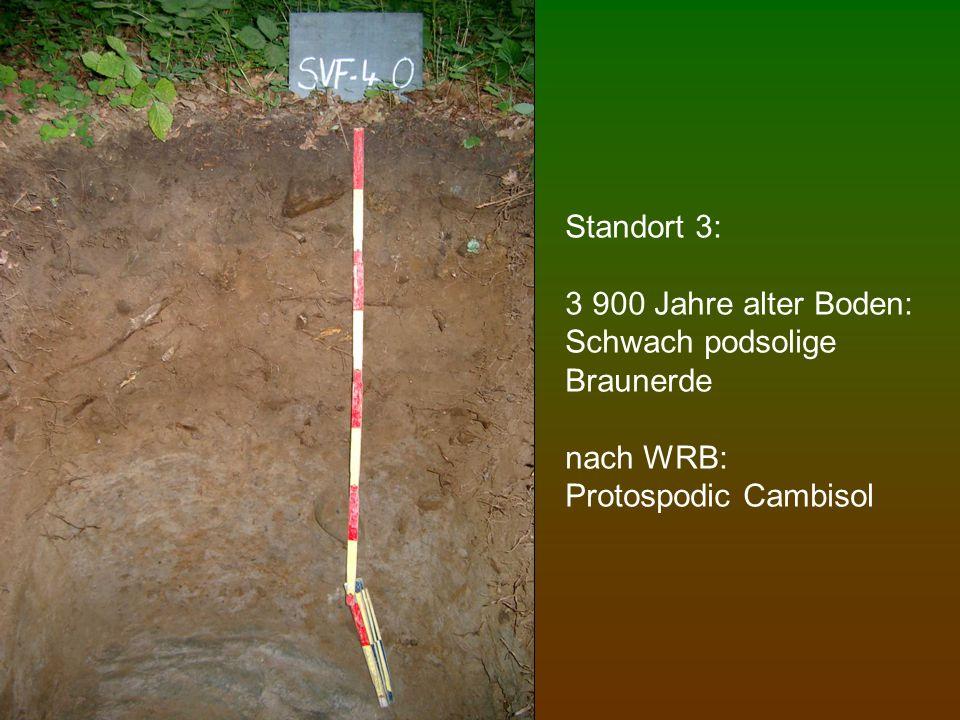 Standort 3: 3 900 Jahre alter Boden: Schwach podsolige Braunerde nach WRB: Protospodic Cambisol