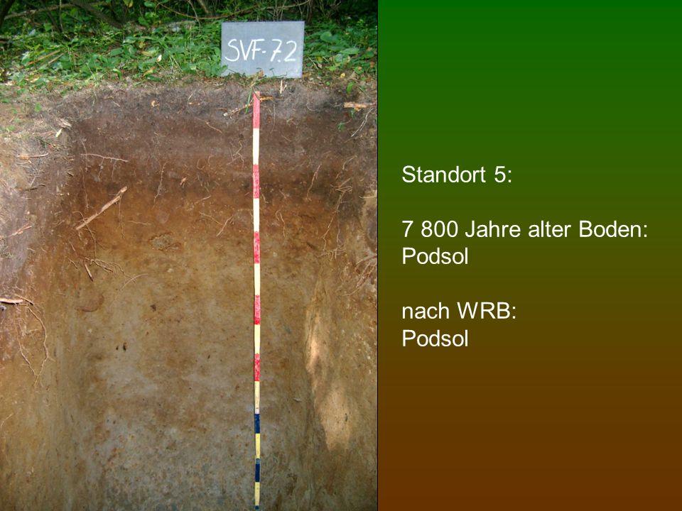 Standort 6: 10 000 Jahre alter Boden: Podsol (mit sehr starker Eisenoxidanreicherung) nach WRB: Podzol