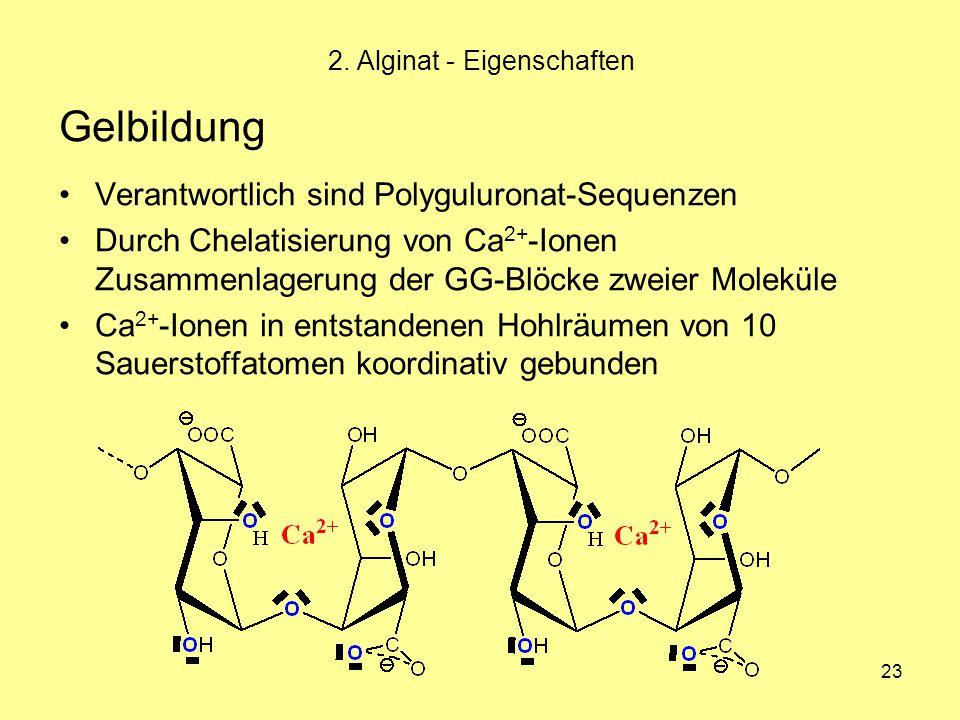 23 2. Alginat - Eigenschaften Gelbildung Verantwortlich sind Polyguluronat-Sequenzen Durch Chelatisierung von Ca 2+ -Ionen Zusammenlagerung der GG-Blö