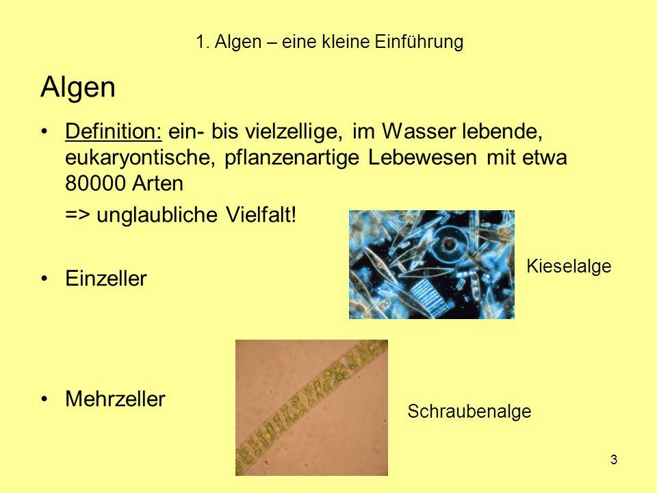 3 1. Algen – eine kleine Einführung Algen Definition: ein- bis vielzellige, im Wasser lebende, eukaryontische, pflanzenartige Lebewesen mit etwa 80000