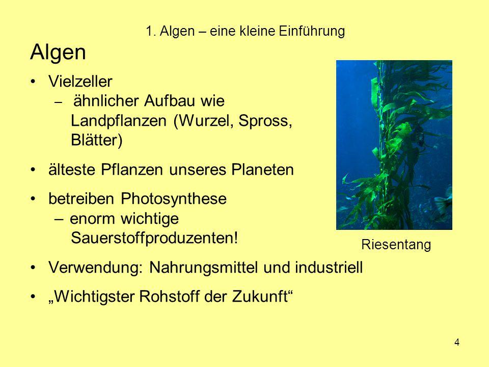 4 1. Algen – eine kleine Einführung Algen Vielzeller – ähnlicher Aufbau wie Landpflanzen (Wurzel, Spross, Blätter) älteste Pflanzen unseres Planeten b