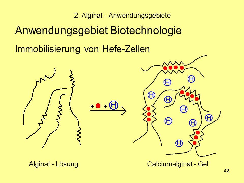 42 Anwendungsgebiet Biotechnologie Immobilisierung von Hefe-Zellen 2. Alginat - Anwendungsgebiete Alginat - LösungCalciumalginat - Gel