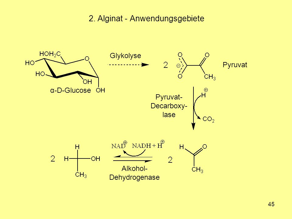 45 2. Alginat - Anwendungsgebiete α-D-Glucose Glykolyse Pyruvat Pyruvat- Decarboxy- lase Alkohol- Dehydrogenase
