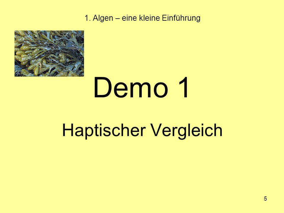 5 1. Algen – eine kleine Einführung Demo 1 Haptischer Vergleich