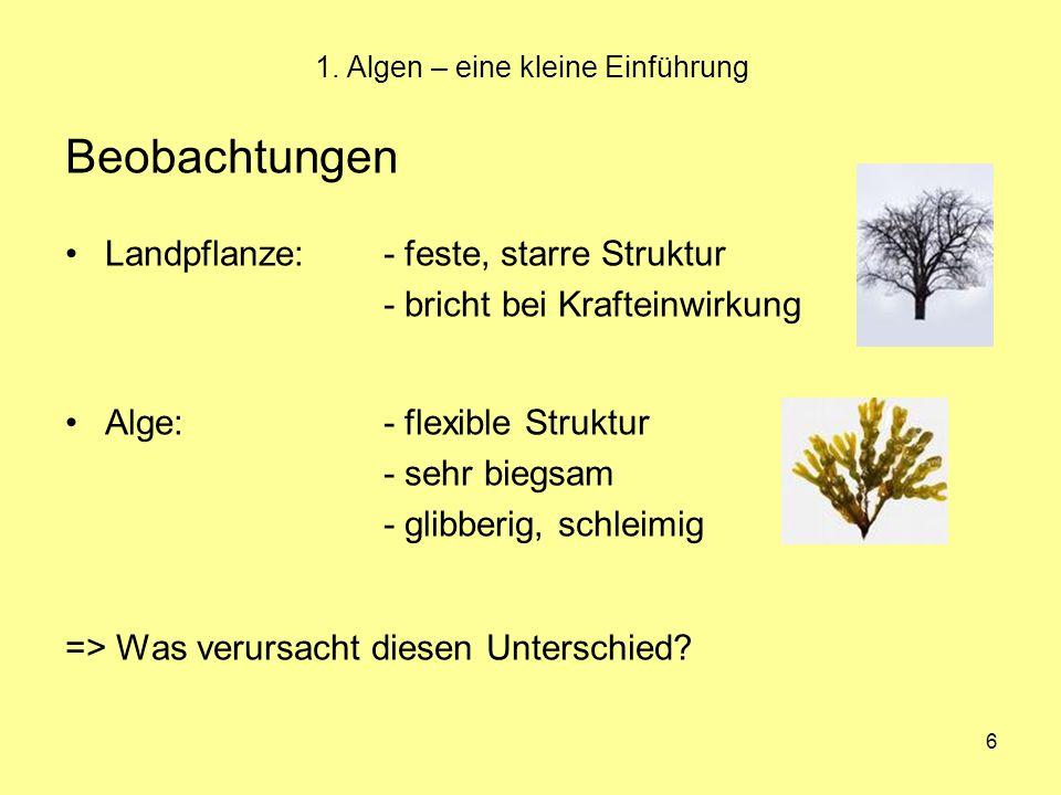 6 1. Algen – eine kleine Einführung Beobachtungen Landpflanze:- feste, starre Struktur - bricht bei Krafteinwirkung Alge:- flexible Struktur - sehr bi