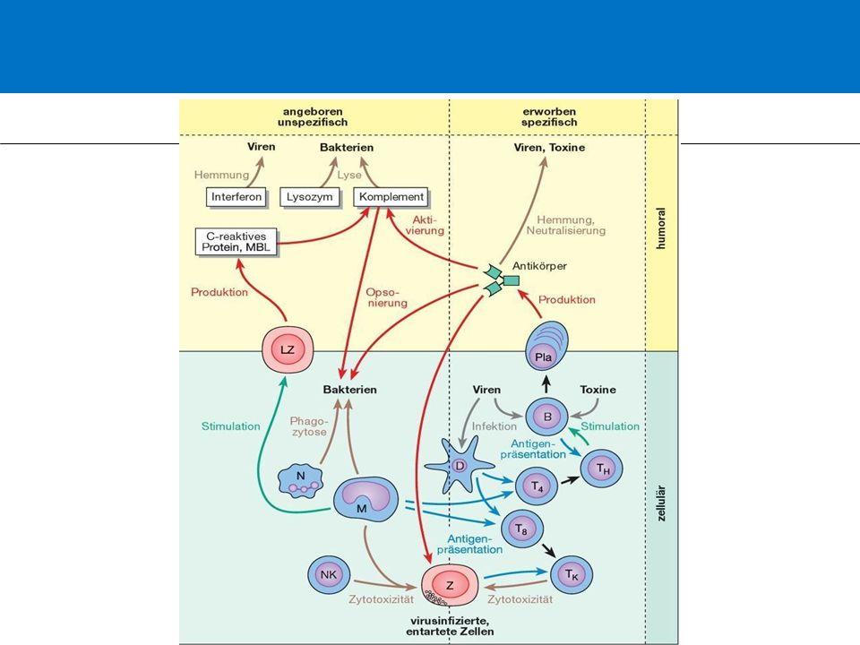 C-reaktives Protein (CRP) Synthese: in der Leber 6-10 h nach IL-6-Stimulation kohlenhydratfreies Protein Referenzbereich: < 0,5 mg/dl Maximalwerte: 10-1000-faches des Normwertes HWZ im Blut: ca.