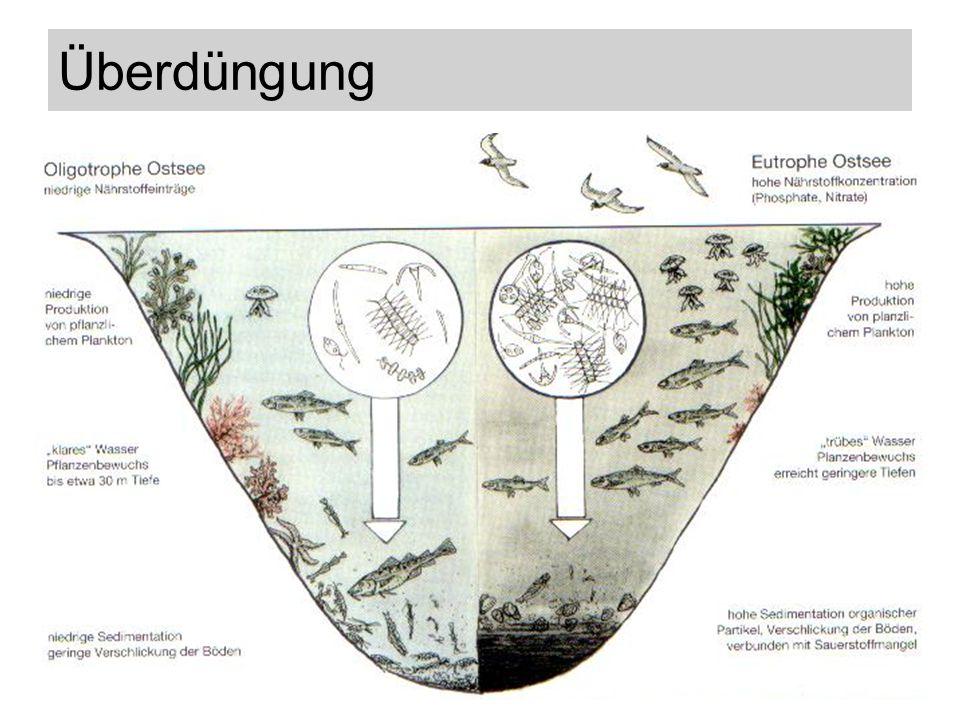 Stickstoffeintrag und Phytoplankton