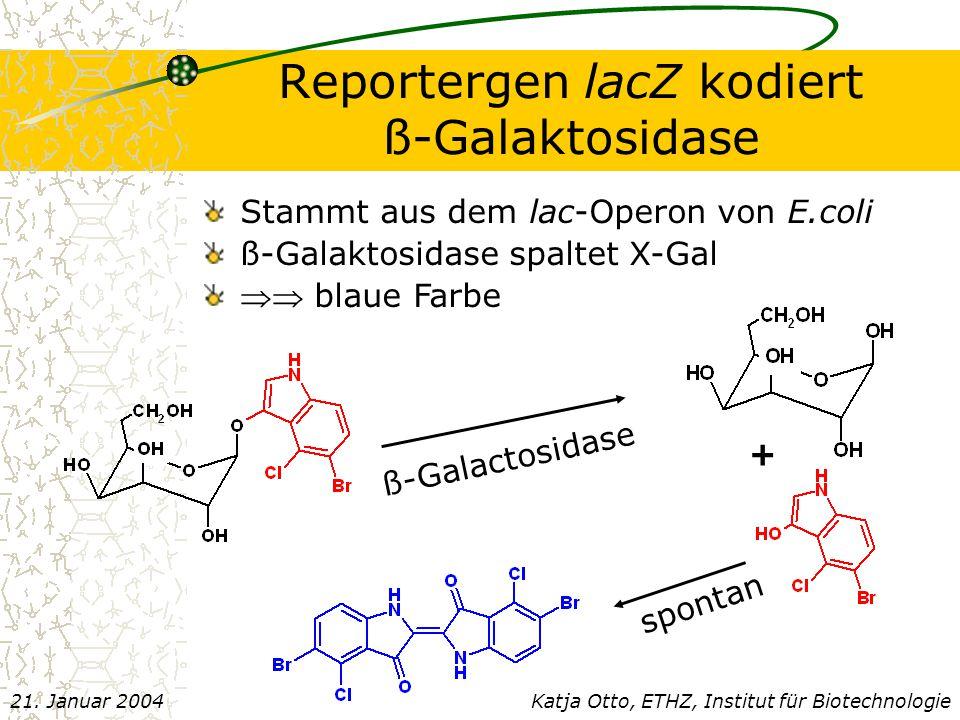 Reportergen lacZ kodiert ß-Galaktosidase Katja Otto, ETHZ, Institut für Biotechnologie21.