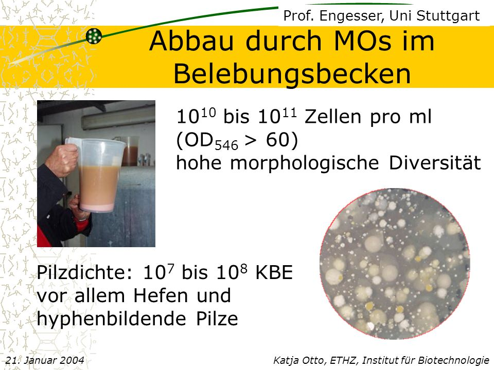 10 10 bis 10 11 Zellen pro ml (OD 546 > 60) hohe morphologische Diversität Pilzdichte: 10 7 bis 10 8 KBE vor allem Hefen und hyphenbildende Pilze Prof.