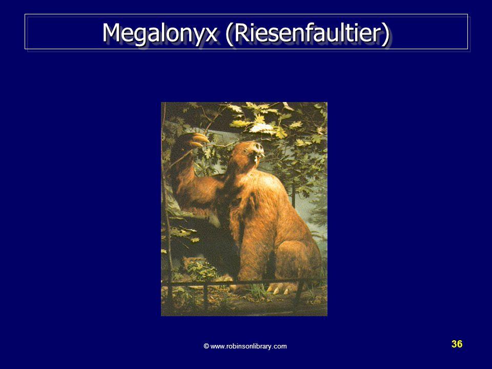 36 Megalonyx (Riesenfaultier) © www.robinsonlibrary.com