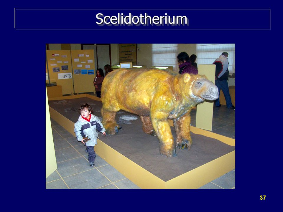 37 ScelidotheriumScelidotherium