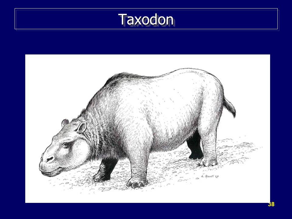 38 TaxodonTaxodon