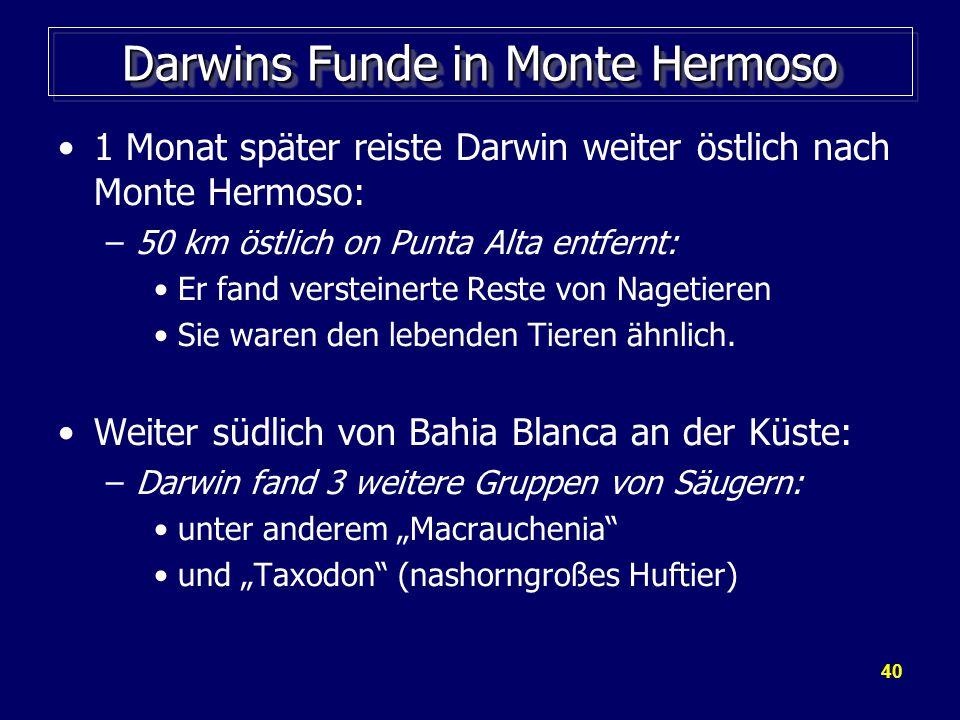 40 Darwins Funde in Monte Hermoso 1 Monat später reiste Darwin weiter östlich nach Monte Hermoso: –50 km östlich on Punta Alta entfernt: Er fand versteinerte Reste von Nagetieren Sie waren den lebenden Tieren ähnlich.